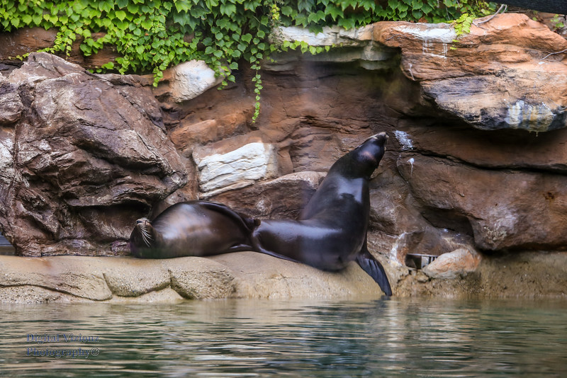 2016-07-17 Fort Wayne Zoo 733LR.jpg