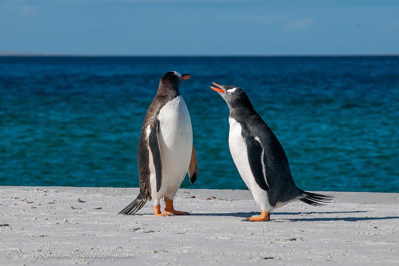 Antarctic-197