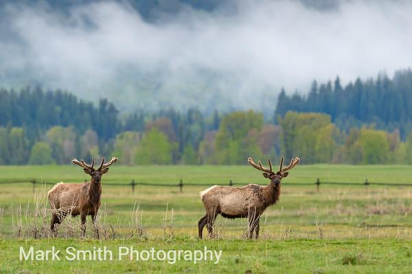 Elk Image Gallery