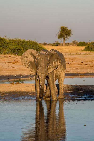 Botswana_June_2017 (4082 of 6179).jpg