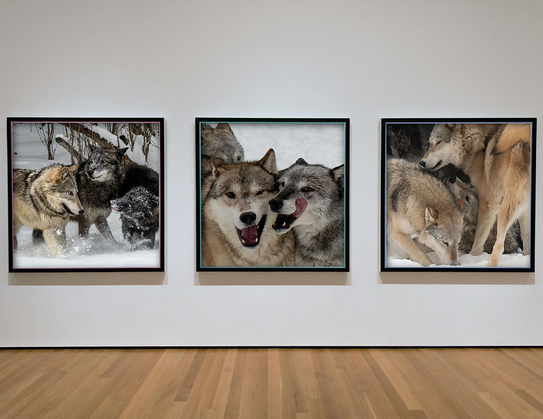 wolfs on wall.jpg