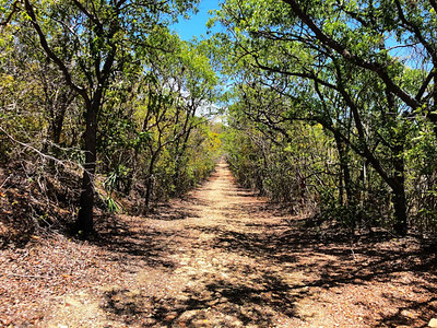 Dry Forest, Guanica