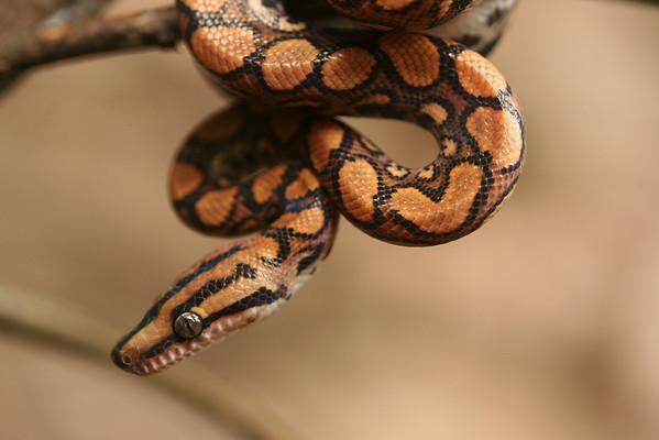 Snakes (Squamata-serpentes)