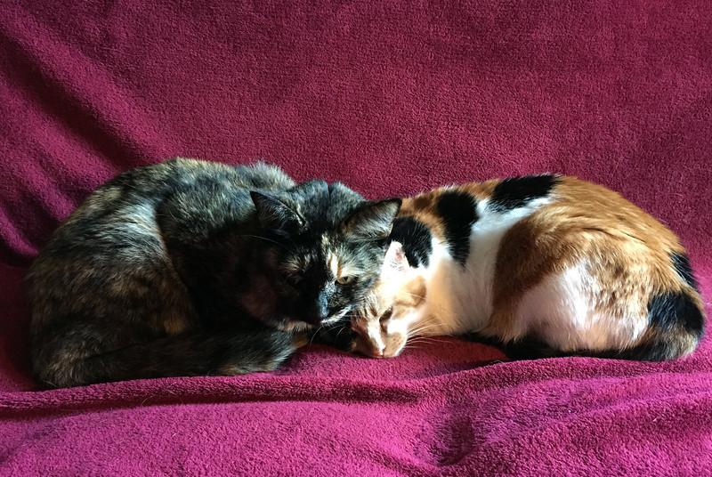 sunday kitties.jpg
