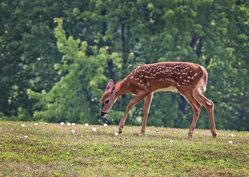 DeerFamily09.jpg