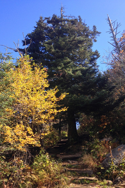 Waterrock Knob Trail
