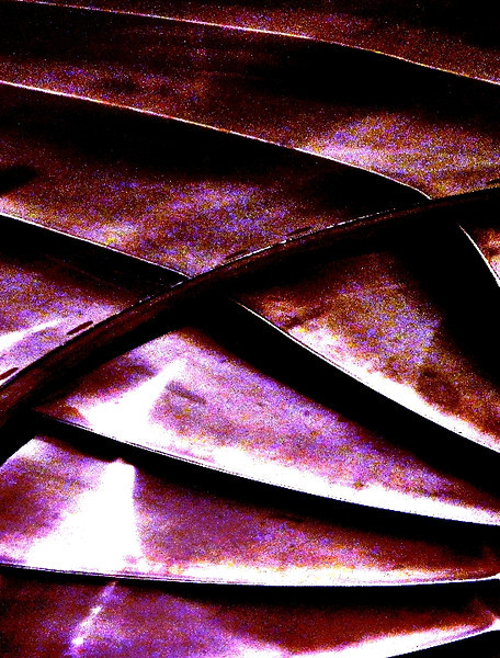 DSC05460 Crop 2 Dark Ruby.jpg