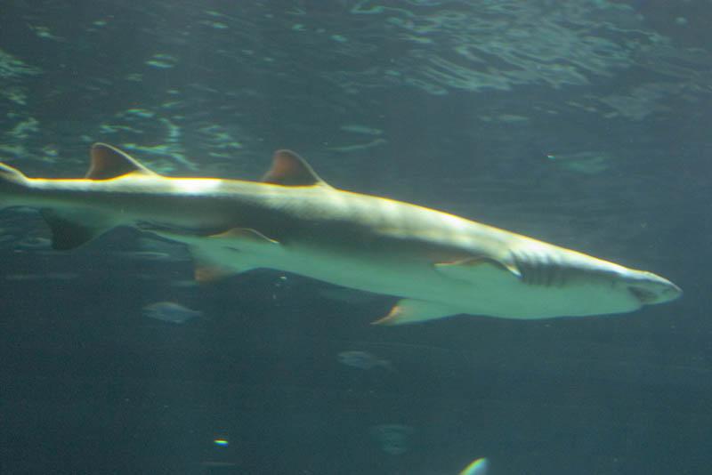 SeaWorld-004.jpg