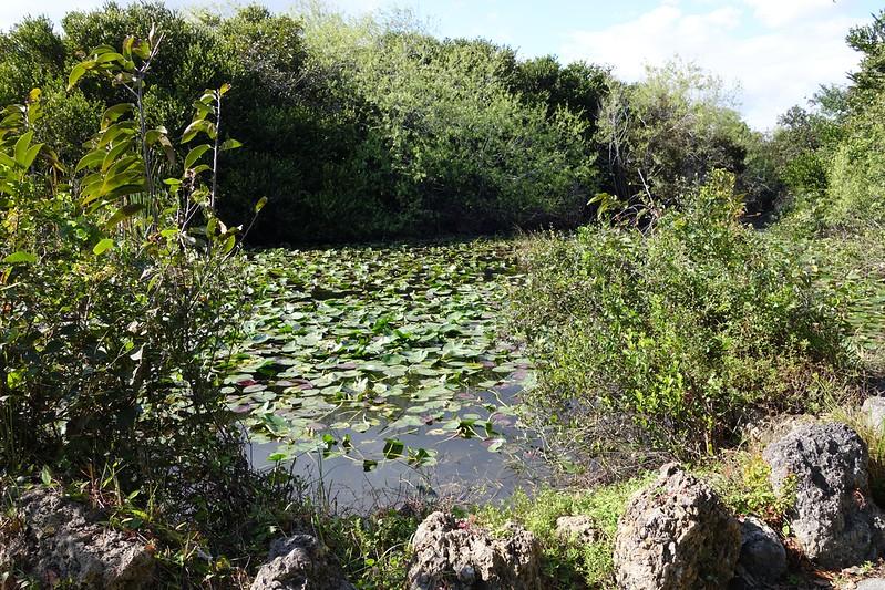 Everglades NP - 27.jpg