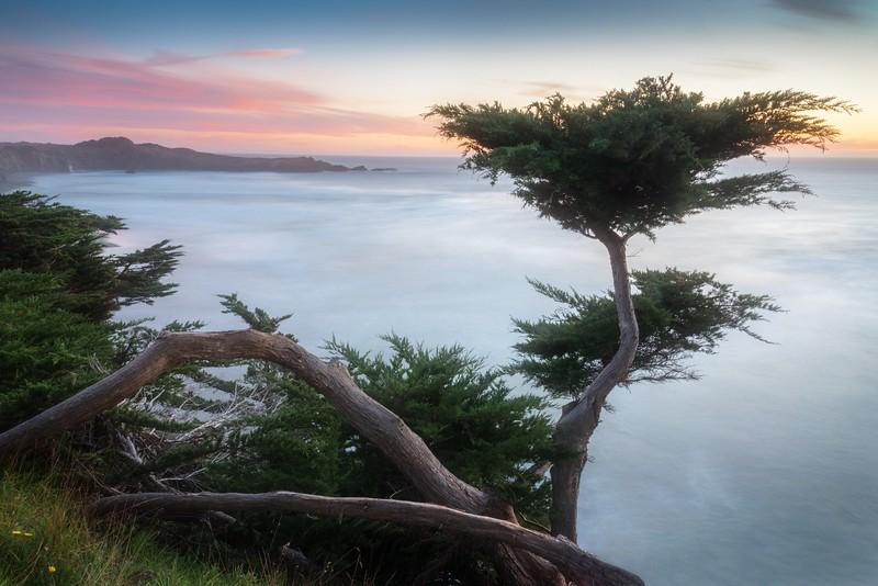 Cypress on the Edge, Sea Ranch, California
