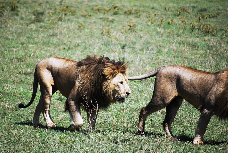 Ngorongoro (148).JPG