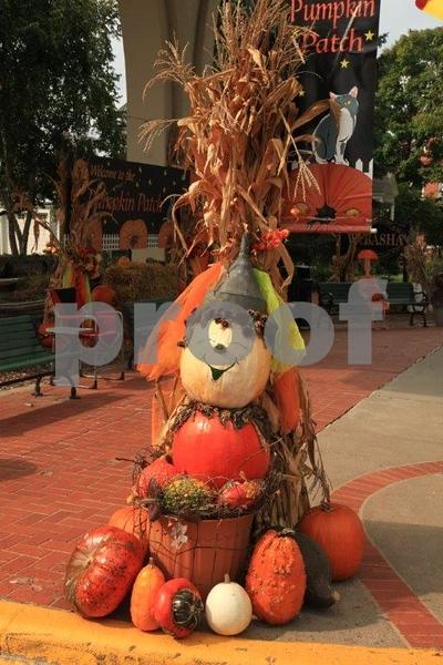 Pumpkin Patch 5643.jpg