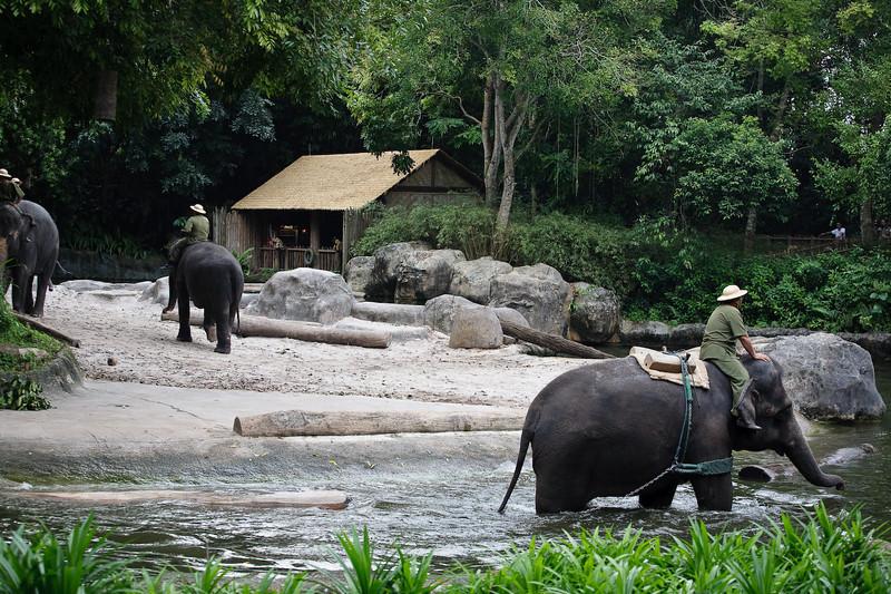 Elephants, Singapore Zoo