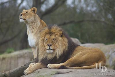 2013-03 Zoo