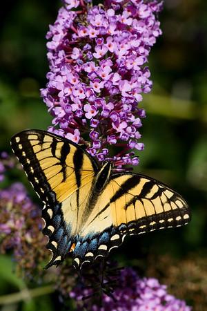 Wildlife Published Images V3