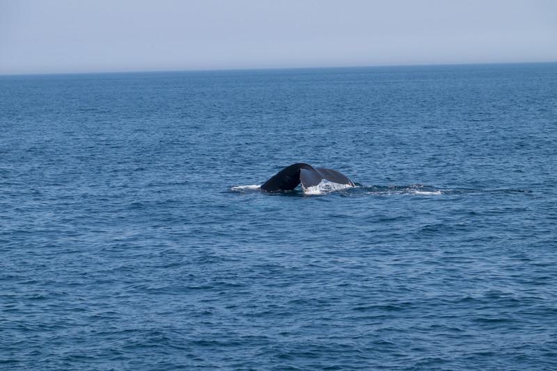 humpbacks-6289.jpg