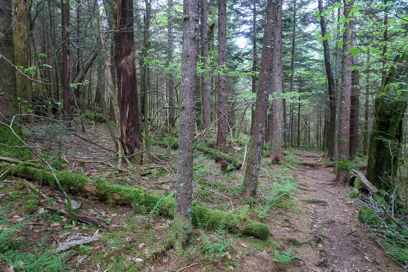 Rough Butt Bald Overlook-MST Access Trail -- 5,400'