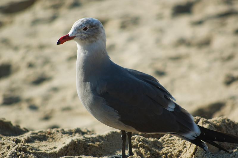 gulls (2).jpg