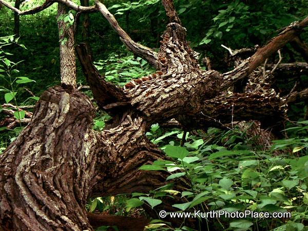 Fontenelle Forest - July 4, 2002
