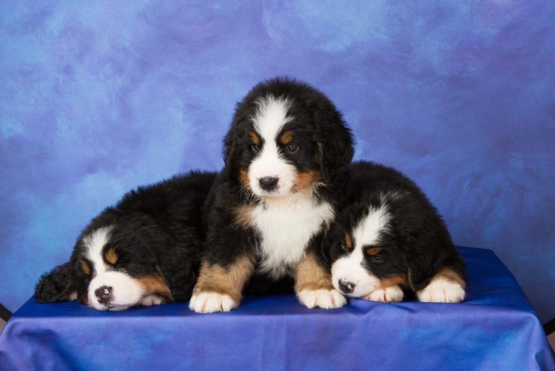 2013-Pearson Pups-Jun02-0317.jpg