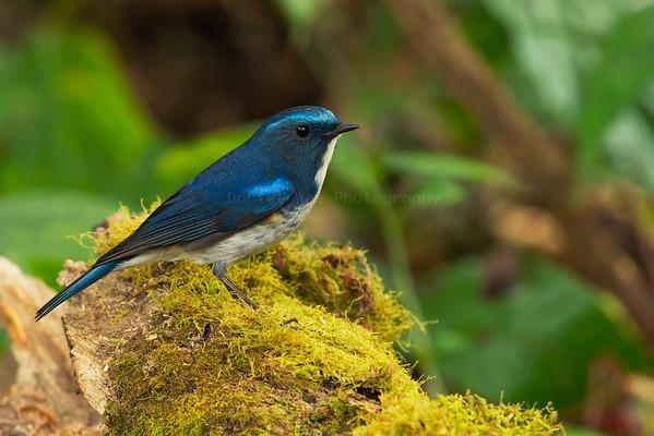Doi Lang (27 Species)