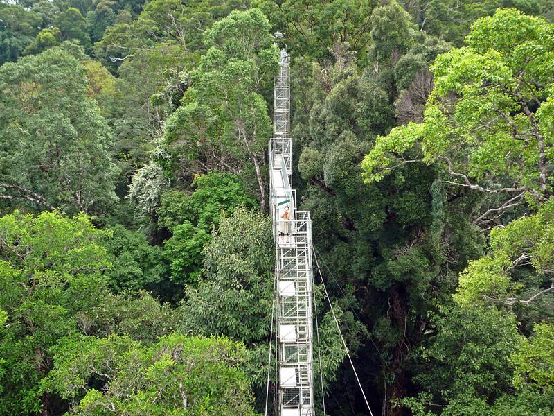 a canopy walk.JPG