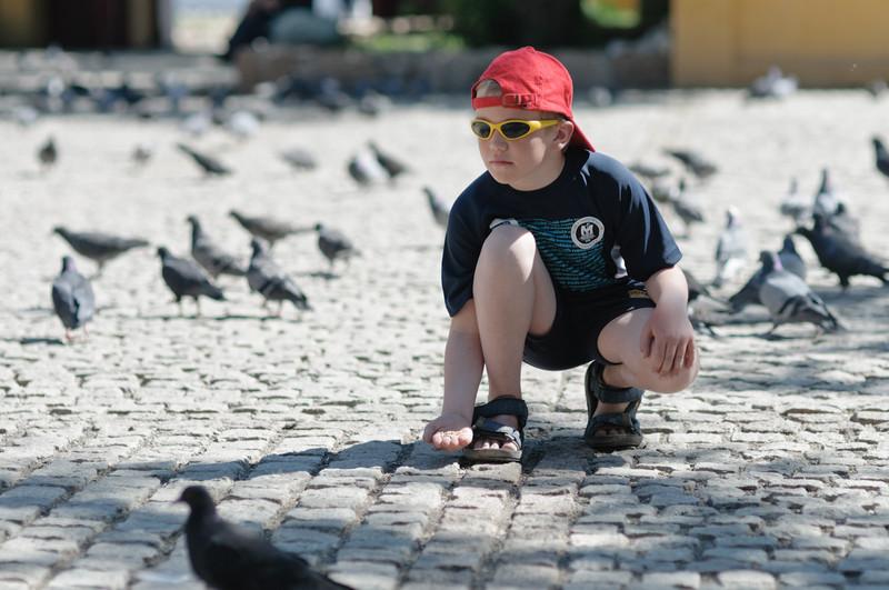 Noch sind die Tauben nicht interessiert.