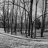 Tree Stand III _ bw