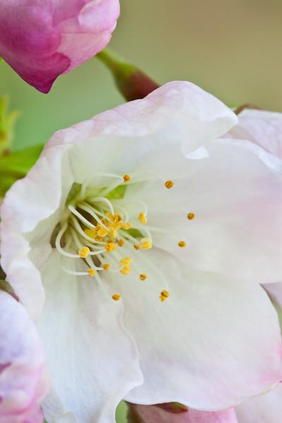 Harbinger of Spring!