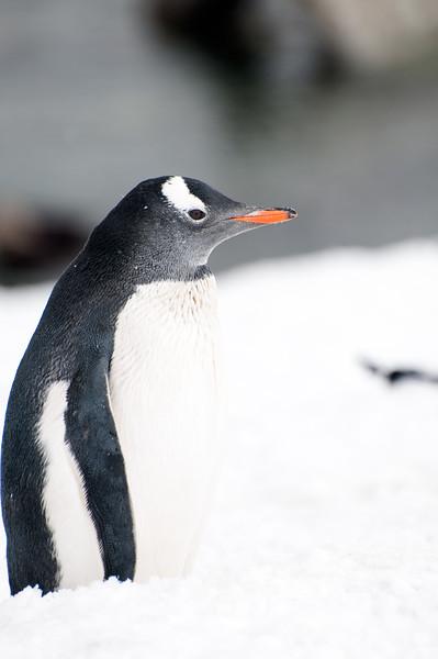 Antarctica 2015 (60 of 99).jpg