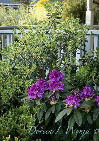 Garden at Argyle winery_1064.jpg