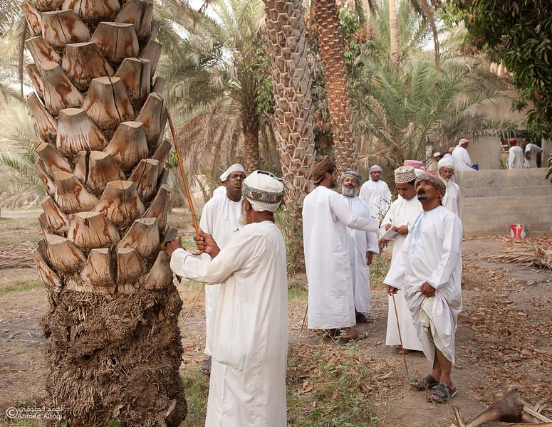 Palm Tree Auction 3- Mudhaibi.jpg