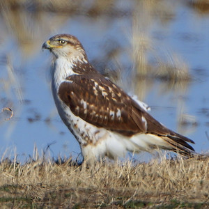 Birding 2021 January