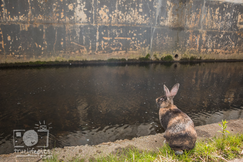 Mouse by the WorcShop Canal May 4, 2017 (17).jpg