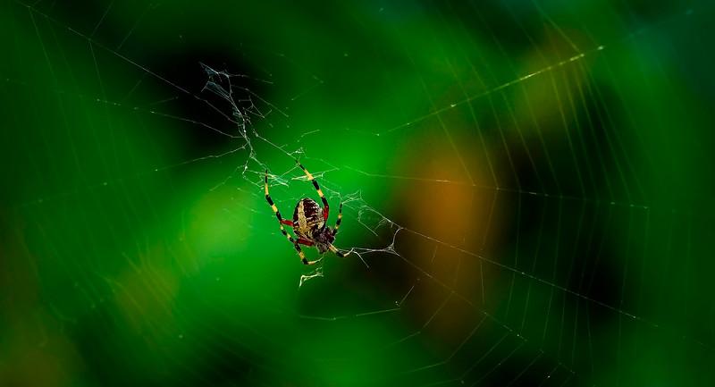 Spiders-Arachnids-104.jpg
