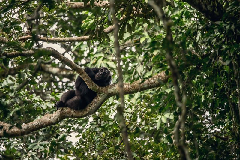 Uganda_T_Chimps-1044.jpg