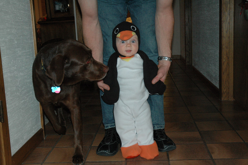 March of the Penguin 2 002.jpg