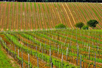 Tuscan landscapes 2013