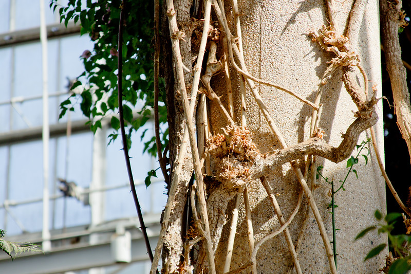 Vines on the Pillar