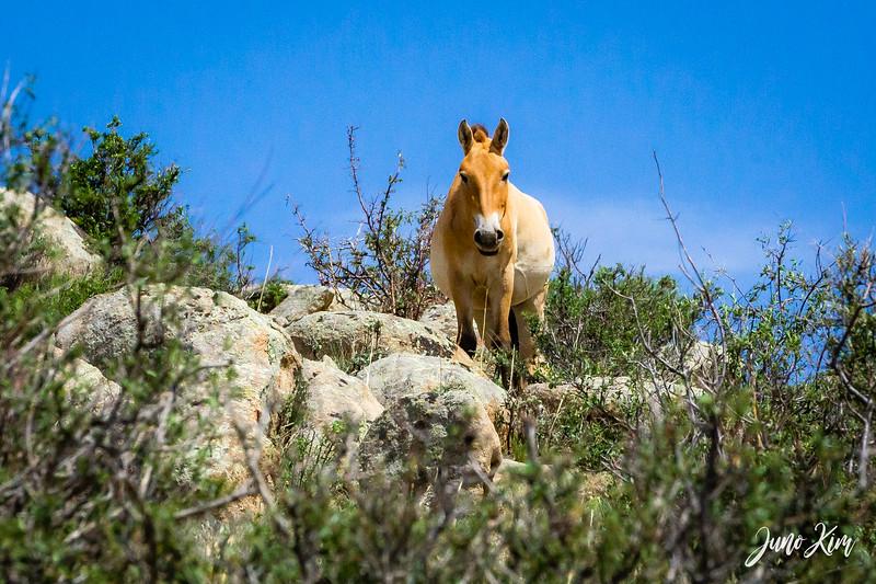 Kustei National Park__6109335-Juno Kim.jpg