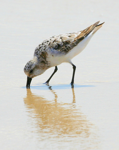 2008 - The Plover at Pikes