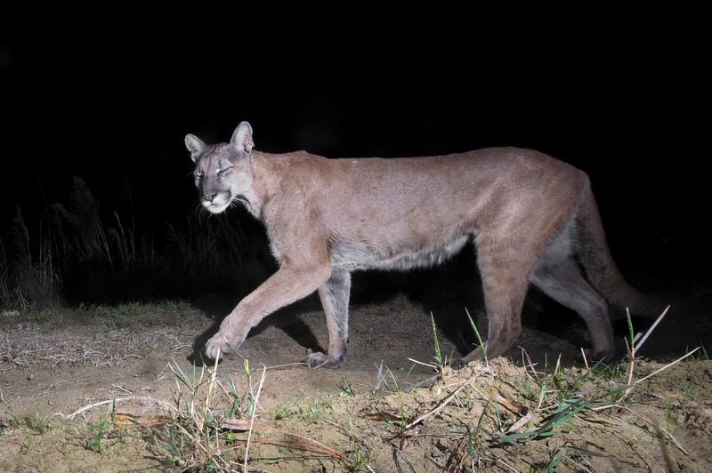 panther 6.jpg
