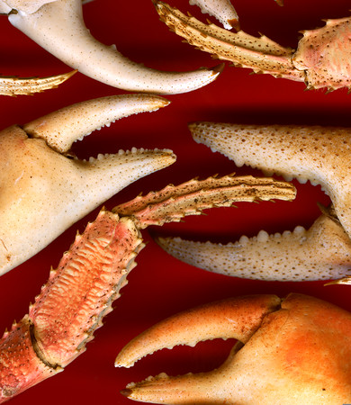 Crab claws 100913-_Photo-by-Ted-Davis017 copia