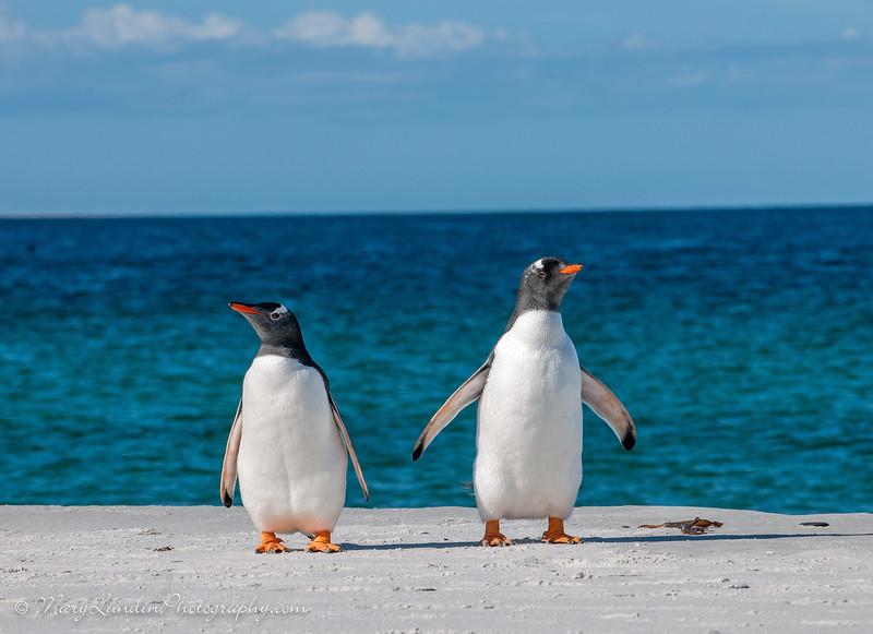 Antarctic-193