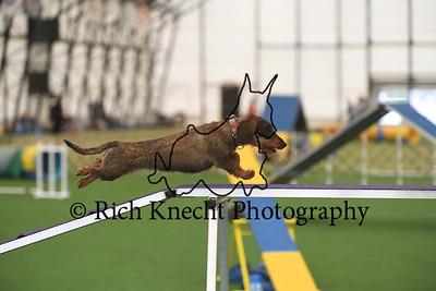 Lancaster Kennel Club AKC Agility Trial
