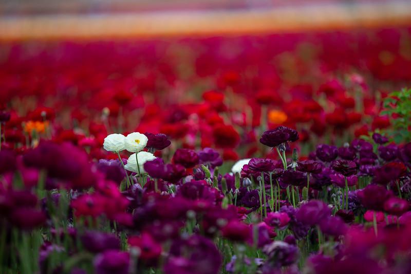 Spring Flowers B-397.jpg