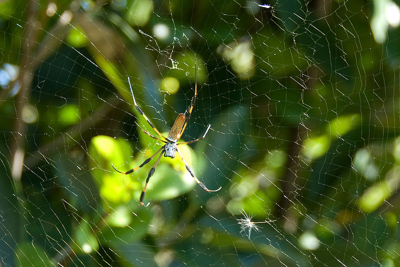 Insect caught on spiderweb in Everglades National Park, Florida