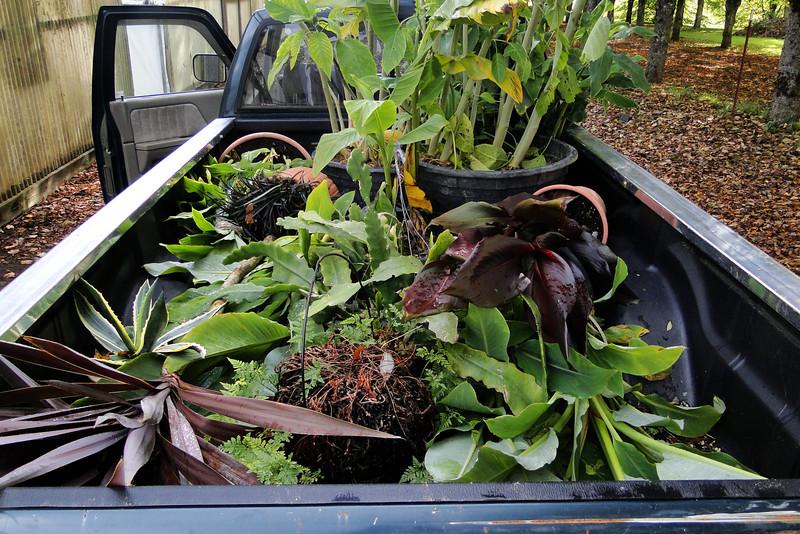 Guy's Plant Rescue Service!