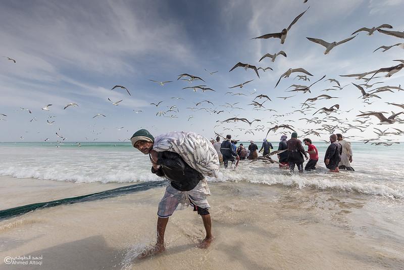 Sardine Season (54)- Dhofar.jpg