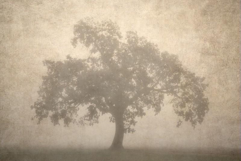 Misty Oak, Oregon